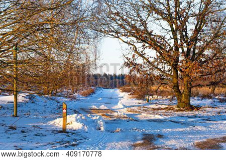 Naitonal Park Veluwe Netehrarlands After Snowfall In Wintertime