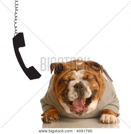 Bulldog Laughing Beside Dangling Phone