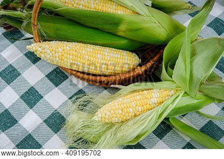 Photograph Of Freshly Picked Sweet Corn On The Cob With Husk On And One Husk Removed,  Getting Ready
