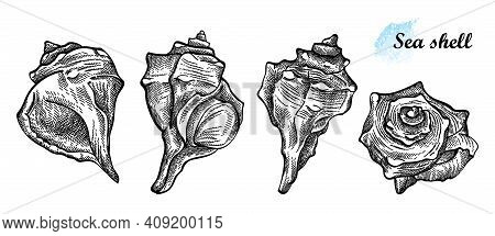 Vector Hand Drawn Set Of Seashell Sketches In Black Isolated On White Background. Silhouette Sketch