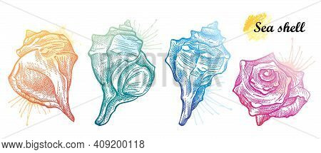 Vector Hand Drawn Set Of Seashell Sketches In Pastel Colored Isolated On White Background. Silhouett