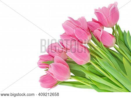 Beautiful Tulips Flowers Isolated On White Background. Springtime Flowers For Womens Day, Wedding, B