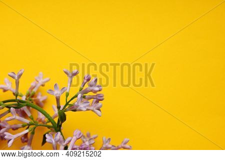 Lilac. A Branch Of Purple Lilac On A Yellow Background. Lilac Blooming View From Above. Spring, Plan