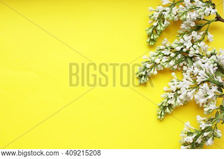 Lilac. A Branch Of White Lilac On A Yellow Background. Lilac Blooming View From Above. Spring, Plant