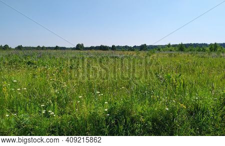 A Beautiful Colorful Meadow Of Wildflowers. Summer. Green Meadow In Sunlight.