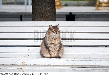 Fluffy Gray Stray Cat Sitting On A Park Bench
