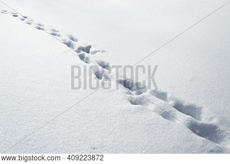 Deep Footprints In The Snow On A Sunny Winter Day