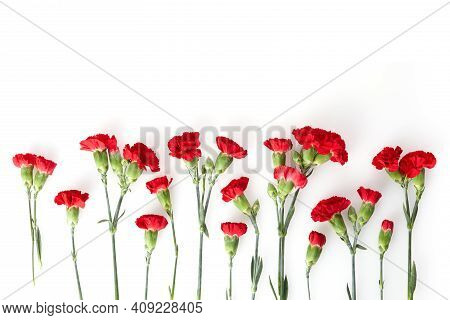 Beautiful Red Carnation Flowers Isolated On White Background