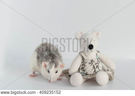 A Cute Decorative Black And White Rat Sits Next To A Plush Rat Doll. Concept: Year Of The Rat Accord