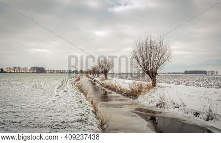 Row Pollarded Willow Trees Along A Stream In A Dutch Winter Landscape. The Fields Are Covered With A