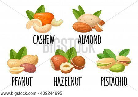 Set Hazelnut, Peanut, Almond, Cashew, Pistachio. Vector Realistic Icon Nut