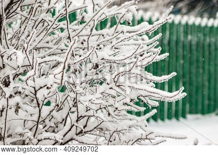 Frozen Bush Covered With Hoarfrost Behind The Bush Green Wooden Fence Under The Snow, Snowflakes Are