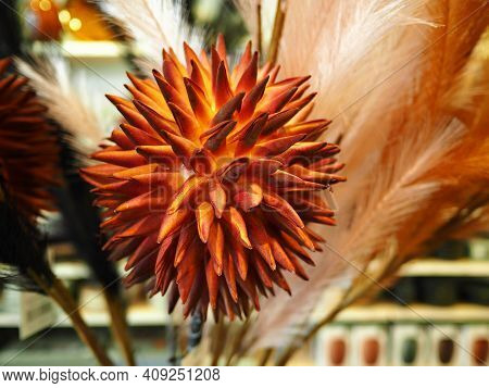 Beautiful Bright Orange Color Dry Flower Arranged In A Vase