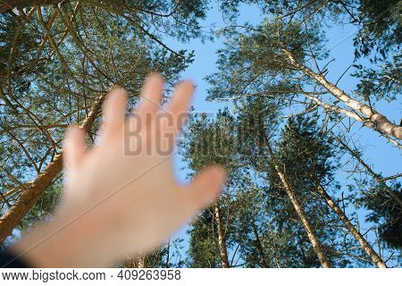 Human Hand Reaching Up In A Pine Forest, First-person View. The Edges Of The Trees On A Sunny Day. S