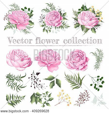 Set Of Vector Floral Compositions. Pink Peonies, Berries, Gypsophila, Green Plants And Leaves. Flowe