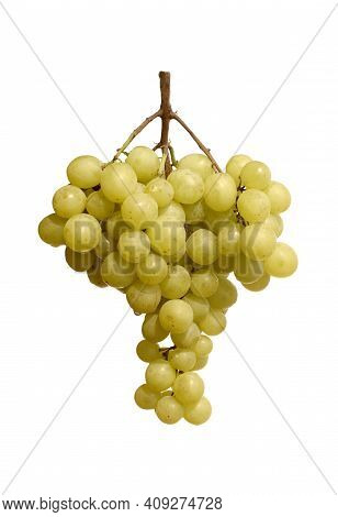 Still Life With Green Ripe Grape Berries On Hanging Branch Over White Background Studio Shot Front V