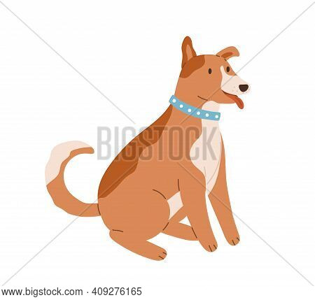Happy Friendly Dog Sitting With Tongue Out And Wagging Tail. Cute Brown Puppy With Collar On Neck. C