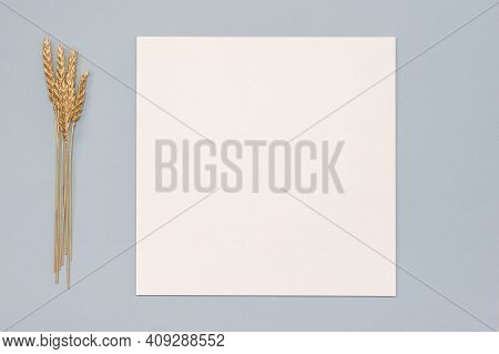 White Paper Empty Blank, Golden Dried Grass Decoration On Neutral Background. White Square Invitatio