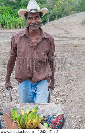 Rivas, Nicaragua. 07-15-2016. Man Collecting Bananas From His Farm In An Rural Areas Of Nicaragua. F
