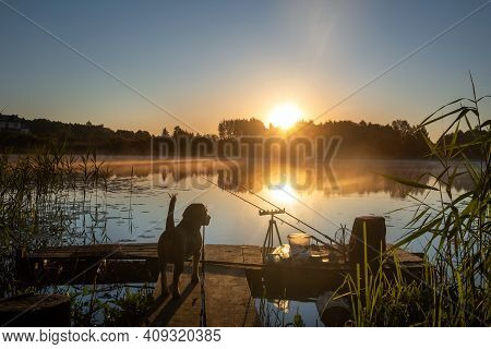 A Dog Watches The Fishing Rods On The Pier Set Up For Fishing On The Lake At