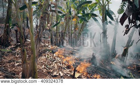 Climate Crisis. Big Flame In National Park While Dry Season. Destruction Of Raiforest By Bushfires.