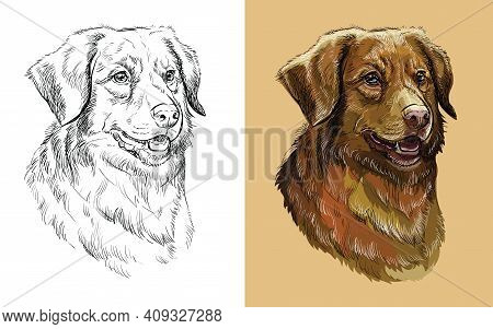 Realistic Head Of Nova Scotia Duck Tolling Retriever Dog. Vector Black And White And Colorful Isolat