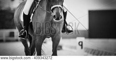 Equestrian Sport. Portrait Sports Red Stallion In The Double Bridle. The Leg Of The Rider In The Sti