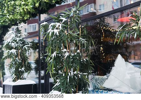 Snow-covered Bamboo In Front Of The Doors Of A City Diner