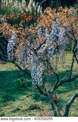 Blossoming Branches With Bloom Purple, Violet, White, Blue Flower Petals And Orange And Brown Leaves