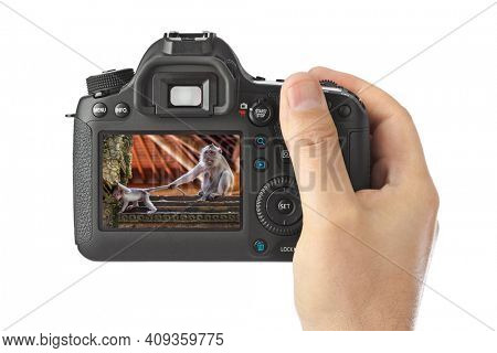 Camera and Monkey in Bali Indonesia (my photo) isolated on white background