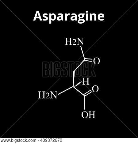 Asparagine Is An Amino Acid. Chemical Molecular Formula Asparagine Is Amino Acid. Vector Illustratio