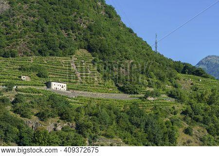 Sentiero Della Valtellina, Sondrio Province, Lombardy, Italy: Rural Landscape With Vineyards Seen Fr