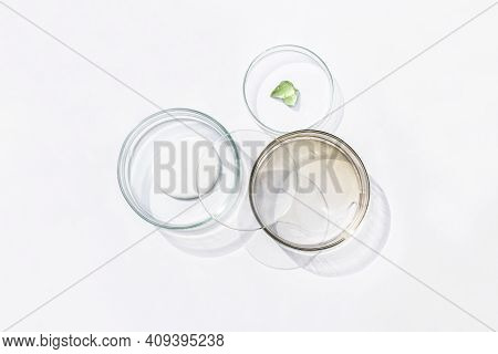 Petri Dishes With Cosmetic On White Background. Top View, Flat Lay. Concept Skincare. Dermatology Sc