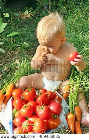 Baby Sitting On Pile Of Ripe Tomatoes. Child In Diaper Choosing Tomato. Red Tomatoes For Child. Baby