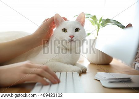 Adorable White Cat Lying Near Keyboard On Table And Distracting Owner From Work, Closeup