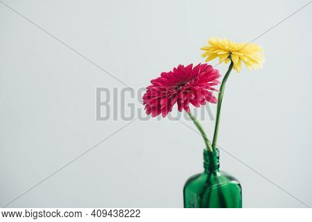 Yellow And Pink Gerber On A White Background