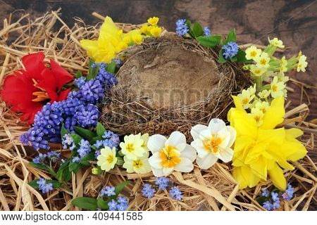 Flown the nest concept with an empty natural nest and spring flowers of daffodils, narcissus, tulip, grape hyacinths and forget me nots on rustic wood background.