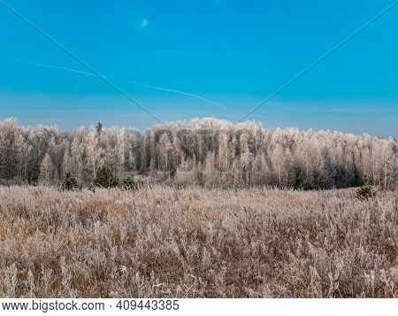 Trees Of A Birch Grove Covered With Frost In Winter Against A Blue Sky. Birch Grove. Meadow. Frosty