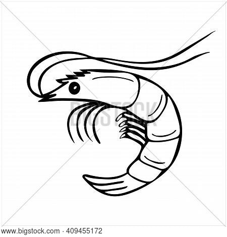Prawn, Hand Drawn Isolated Vector Illustration In Black And White