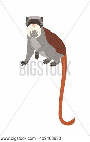 Emperor Tamarin Or Small Monkey With Long Facial Hairs, Gray Coat And Reddish Tail. American Animal