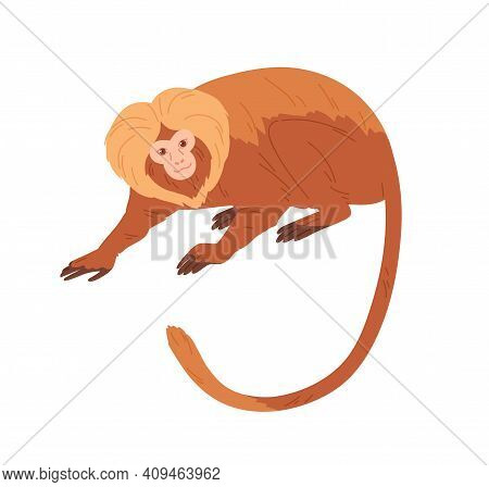Lion Tamarin Or Monkey With Reddish Hair, Golden Mane And Long Tail. Exotic Jungle Animal With Fluff