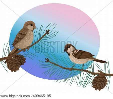 Sparrows, Plumage Birds, Sits On Brunch Pine Tree . Vector Drawing Cartoon Illustration On White Bac