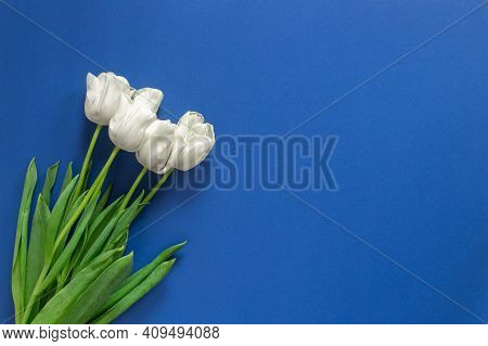 White Tulips As Present On 8 March Isolated On The Dark Blue Background. Woman's Day Gift Celebratio