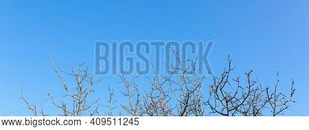Tree Branches Without Leaves Close-up Against A Bright Blue Sky On A Sunny Spring Day. Natural Minim