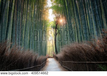Arashiyama Bamboo Grove Forest And Famous Path In Kyoto Japan. Soft Morning Shot Golden Hour With Su