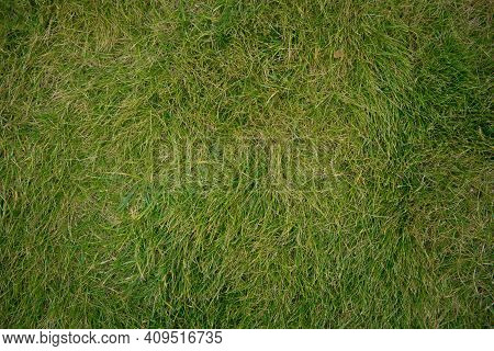 The Texture Of Green Grass For The Background . Green Grass Background Texture .top View.
