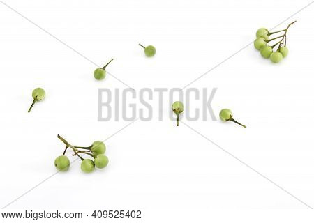 Solanum Torvum ,turkey Berry On White