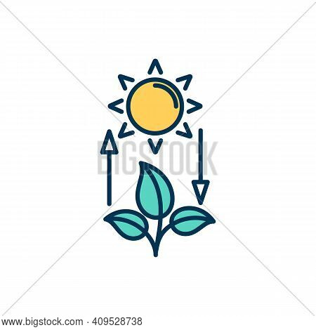 Competent Photosynthesis Rgb Color Icon. Using Energy From Sunlight. Green Plants, Leaves, Flowers.