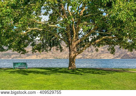Lonely Bench On A Lake Shore With Mountains Overview Under The Chestnut Tree