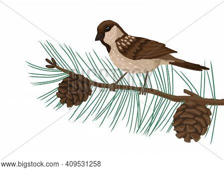 Sparrow, Plumage Bird, Sits On Brunch Pine Tree . Vector Drawing Cartoon Illustration On White Backg